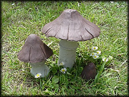 Parasol Toadstool Clump from Dorset Toadstools Holdenhurst